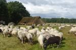 Besturen Drentse kuddes hebben regelmatig overleg
