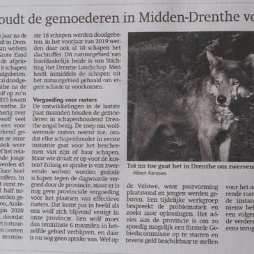 In Midden Drenthe slaat de wolf toe